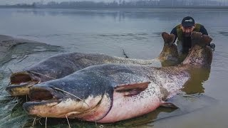 MONSTER BIG ITALIAN CATFISH CAUGHT ON CAMERA - HD by YURI GRISENDI