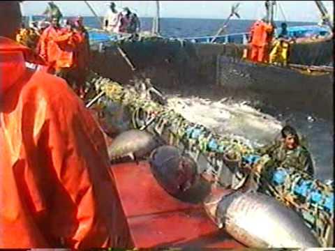 Pesca de atún con almadraba