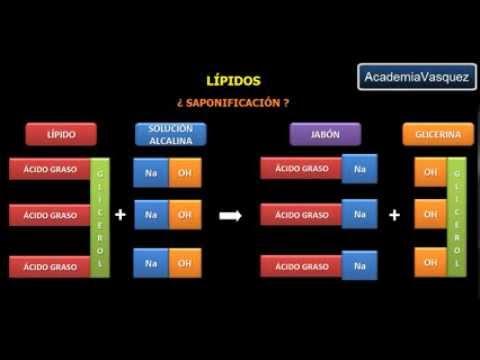 lipidos no saponificables esteroides