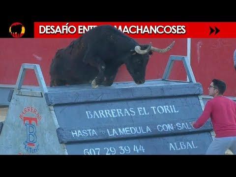 PRIMER DESAFÍO ENTRE MACHANCOSES - FERIA DE INVIERNO LA VALL D´UIXÓ 16/02/2019