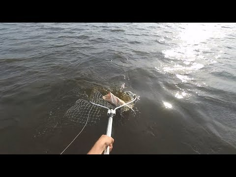 лов щуки на кружки видео на озере в рб