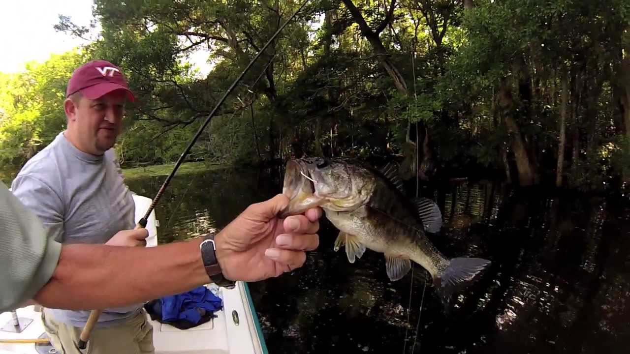Let 39 s go fishing in palatka fl on the st johns river for Out of state fishing license florida