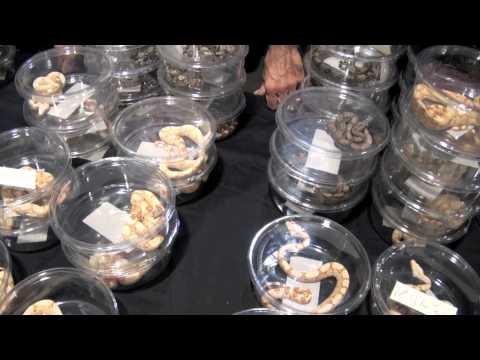 Anaheim NARBC Reptile Expo 2010 ( Original Version)