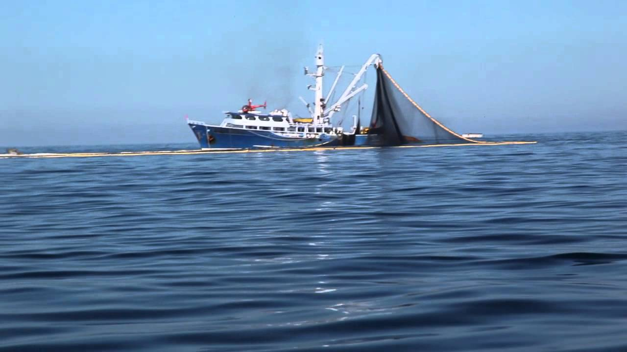 Commercial tuna vessel nets dolphins bill fish with tuna for Commercial fishing nets for sale