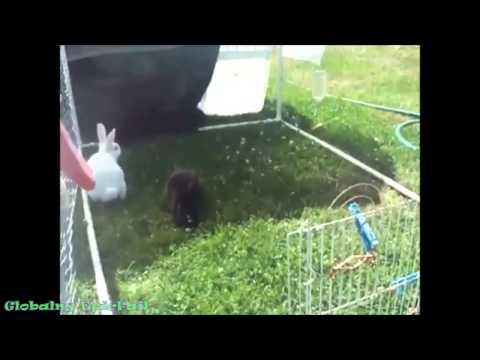 Забавные животные. Маленькие ёжики и котята