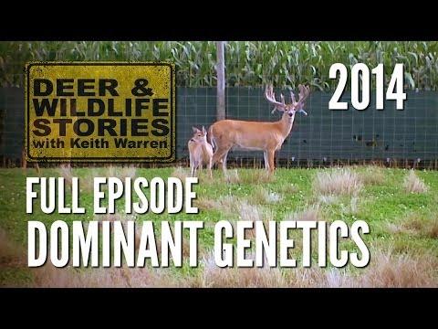 Dominant Genetics - Deer & Wildlife Stories