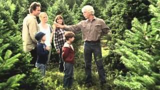 November Christmas - Choosing a Tree