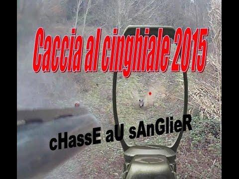 Caccia Al Cinghiale 2015 - Chasse Au SAnGlier- Wild Boar Hunting- Viral Video
