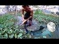 Bắt CÁ LÓC ĐỒNG Được 2 Con cá Khủng Trong Hầm Rau Muống Fishing thumbnail