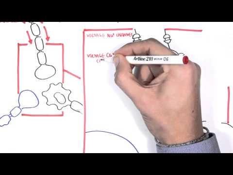 Pharmacology - Antiepileptics thumbnail