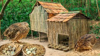 Rescue Quail Bird And Build Beautiful Mini Bamboo House In Forest
