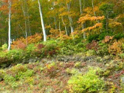 ★中央夏山リフトで紅葉狩り♪