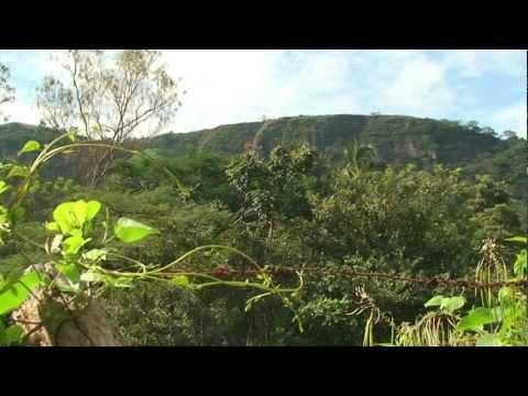 Microorganismos de Montaña