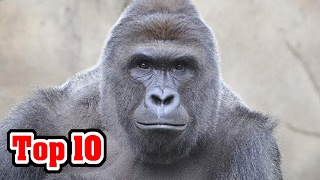 10 ANIMALS THAT MASS MURDERED PEOPLE