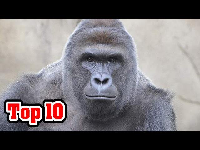 10 Animals That Have Mass Murdered