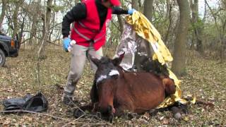 FOUR PAWS team treated badly injured horse