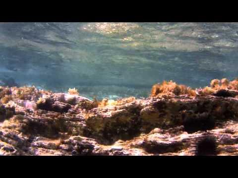 Greece- Andros- Sea
