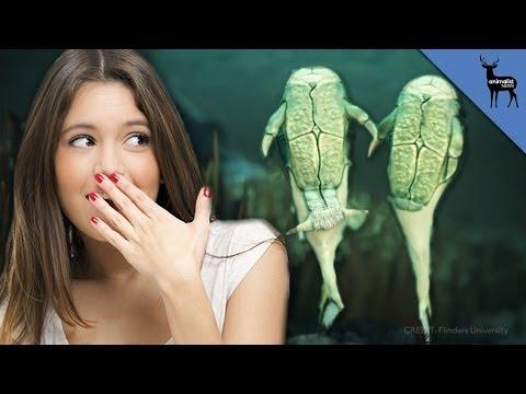 Which Animals Had Sex First? video