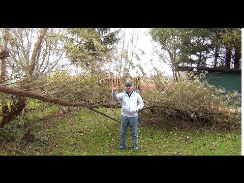 После урагана на даче