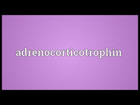 Header of adrenocorticotrophin