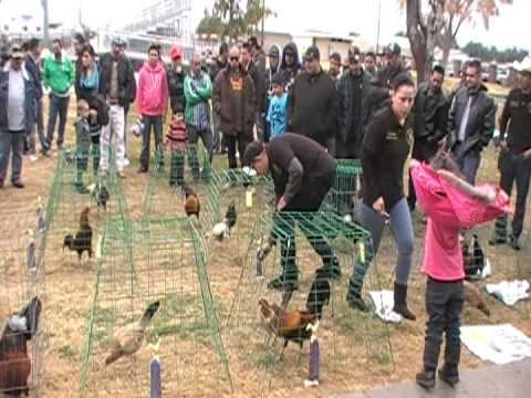 Gamefowl show Jan 26 2013