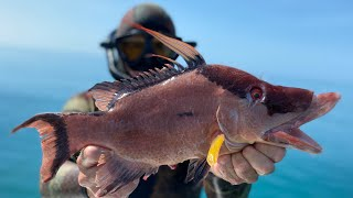SPEARFISHING for HOG FISH (Catch Clean & Cook) The most EPIC day ever ! Huge GIVEAWAY at the end !