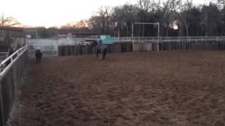 Jingo- Jared Lesh cowhorses