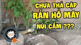 [TIN NÓNG] CẶP RẮN HỔ MÂY NÚI CẤM 60KG KHÔNG THẢ MÀ BÁN LẠI TRẠI RẮN ĐỒNG TÂM? | Dong Tam Snake Farm