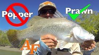 download lagu Popper Bad, Prawn Good Barramundi Fishing Andysfishing Andy's Fish gratis