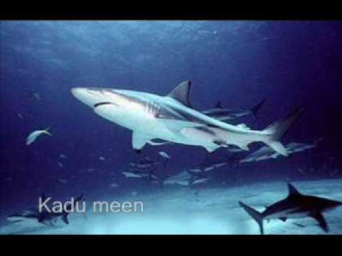 Vaazha Meen Vilangu Meen - Chitiram Pesuthadi - With All Fish Pictures video