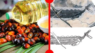The Problem with Palm Oil & A Reptilian Platypus - 7 Days of Science