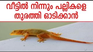 വീട്ടിൽ നിന്നും പല്ലികളെ തുരത്തി ഓടിക്കാൻ | Malayalam Health Tips | Life Hacks Malayalam