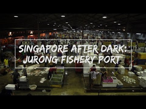 Singapore After Dark: Jurong Fishery Port