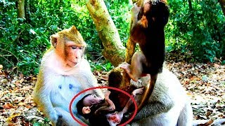 Oh my god Bigbertha try to drag baby monkey from mother monkey- Halo do not let her.