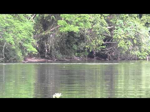 Tapirus videolike for Antas jardin