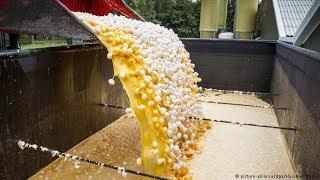 পুরো ইউরোপ জুড়ে শুরু হয়েছে ডিম ধ্বংস কারন জানলে চোখের ঘুম হারাম হয়ে যাবে
