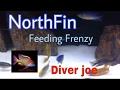 Peacock and Hap feeding frenzy with NorthFin Cichlid formula 2mm mp3 indir