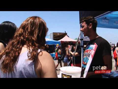 peta2 on the Vans Warped Tour
