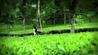 Koto Dur Video Song By Tahsan নীল প্রজাপতি (2013) HQ Bangla Telefilm Music Video