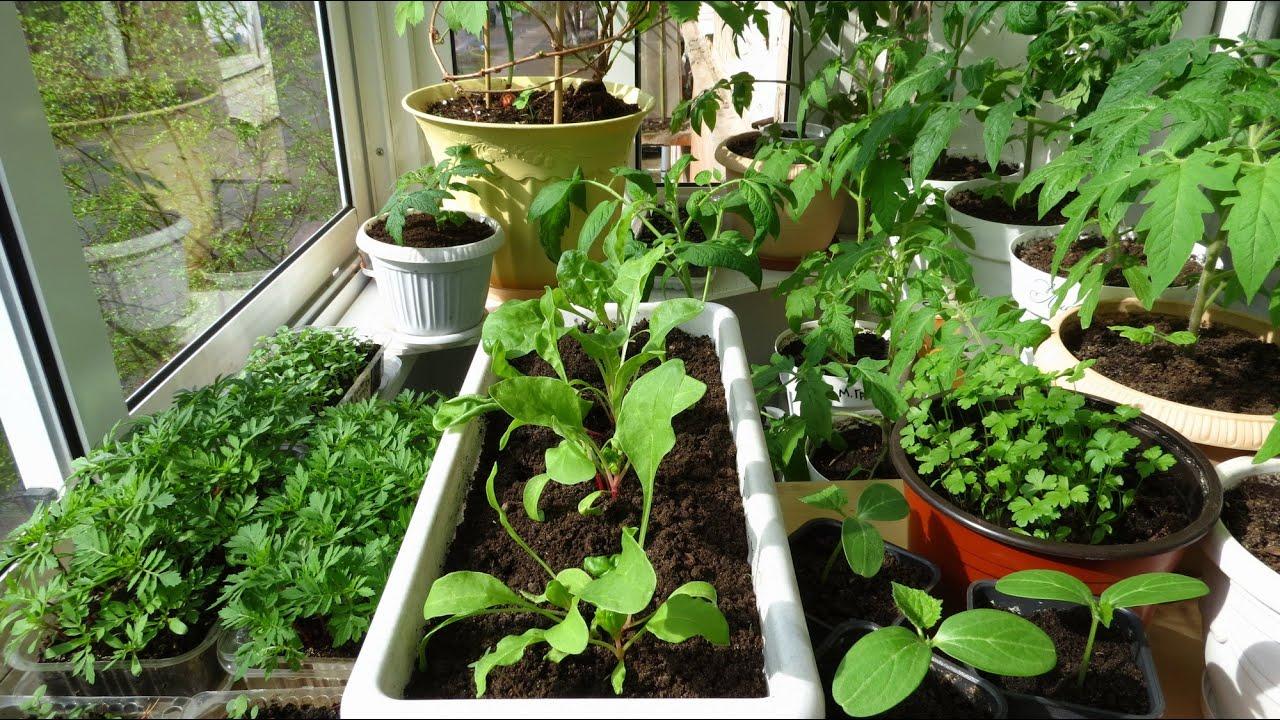 Как и когда сажать цветы на рассаду, чтобы украсить свой сад 85