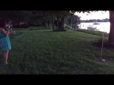 Firefly / lightning bugs mating in backyard by river in Chestertown Maryland