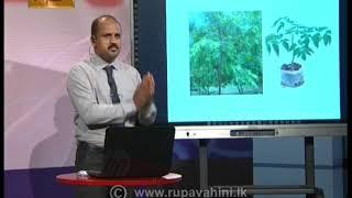 Gurugedara | Grade 5 Tami Live 7th May 2020 | Education Programme