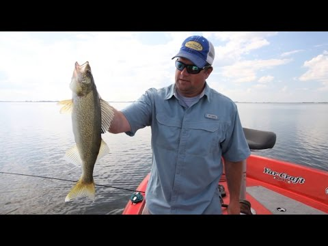 Walleye Fishing with Brand New Spinner Harness