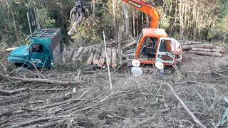 Máy xúc gắp gỗ lên xe,máy  xúc làm việc