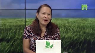 Khắc phục hiện tượng rụng quả ở cây nhãn | Hãy hỏi để biết ngày 25/06/2019 | VTC16