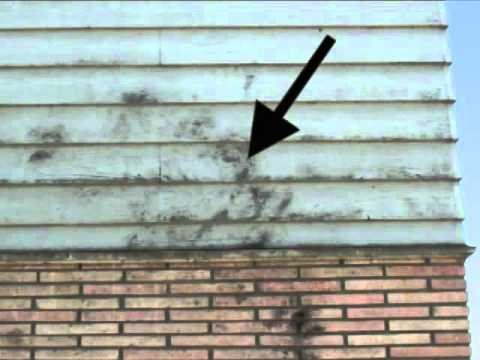 Exterior house toxic mold what does it look like youtube for Exterior mold removal