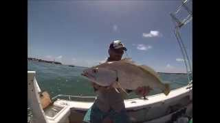 Gold Coast Seaway Amberjack and Jewfish 10/1/2015
