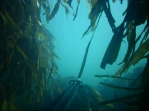 Spearfishing cornwall 2009 highlights