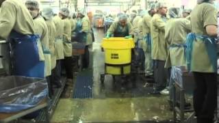 Inside a Poultry Processing Plant   YouTube