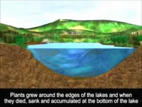 Jak vzniká rašeliniště